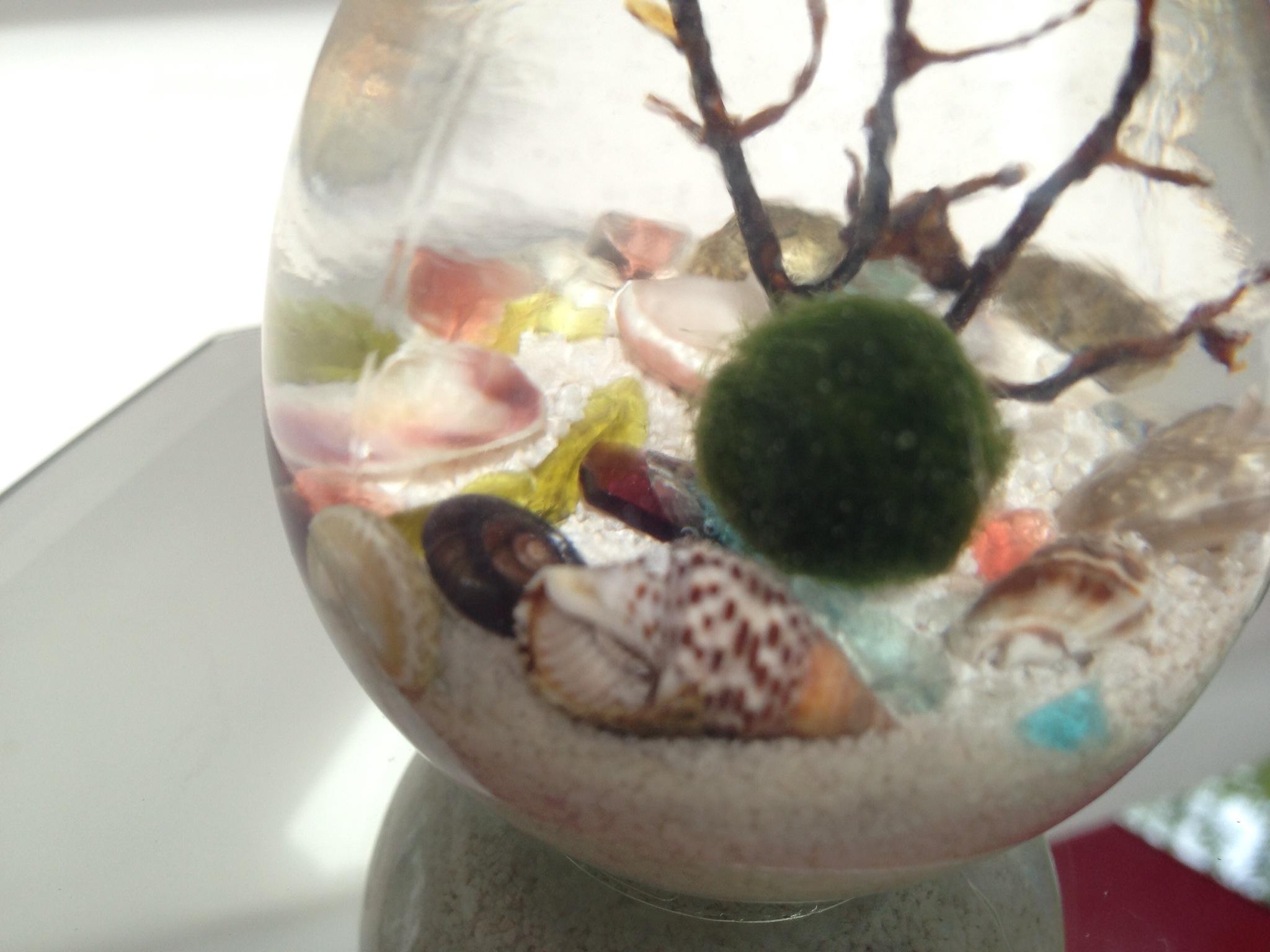 A Bright Idea Marimo Moss Ball In Lightbulb Terrarium Eclecticzenmarimo
