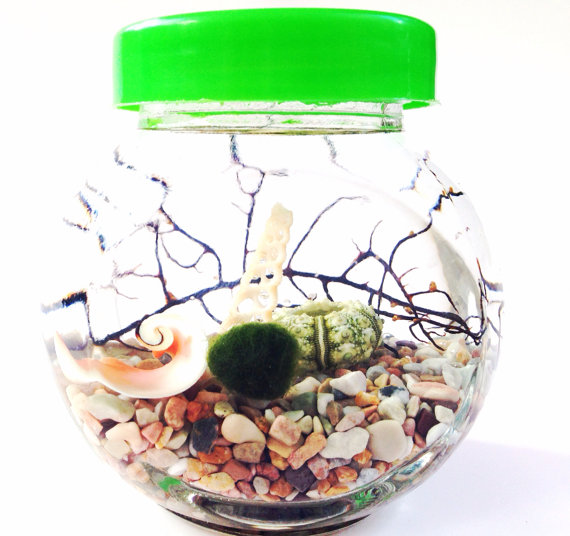 Marimo ball tip of the day